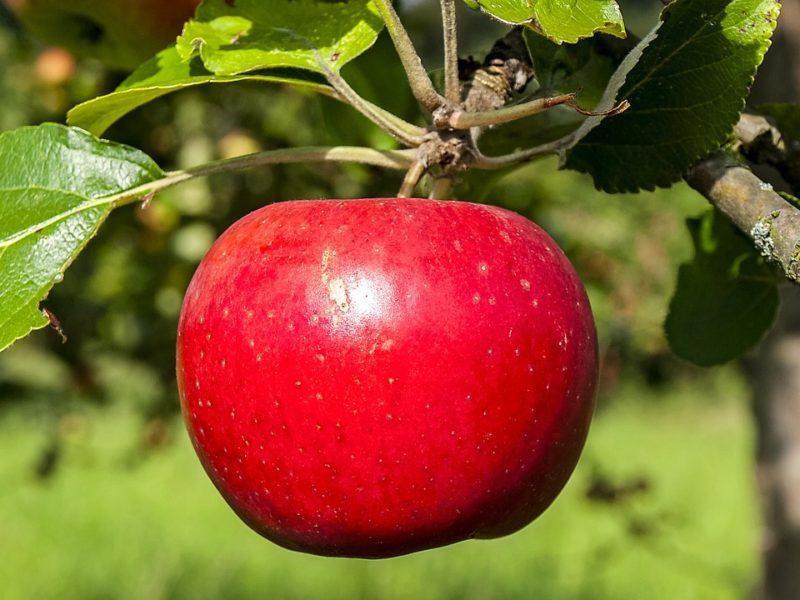 legfinomabb almás sütik
